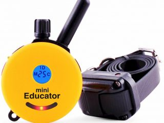 Top 3 Best Dog Training Collars 2020 Review