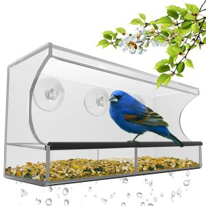Best Bird Feeder