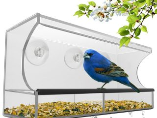 Top 3 Best Bird Feeders 2020 Review