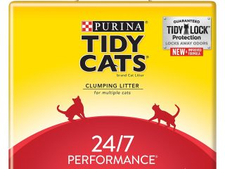 Top 3 Best Litters For Cat 2020 Review