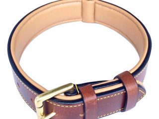 Top 3 Best Collars For Dog 2020 Review
