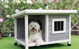 Top 10 Best Dog House 2020 Review