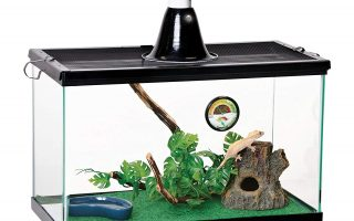Top 5 best snake terrarium kit in 2020 review